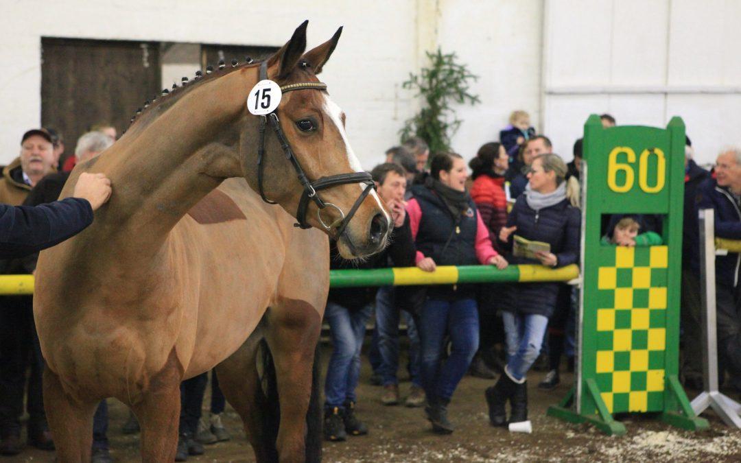 07.12. Pferdeverkaufstag